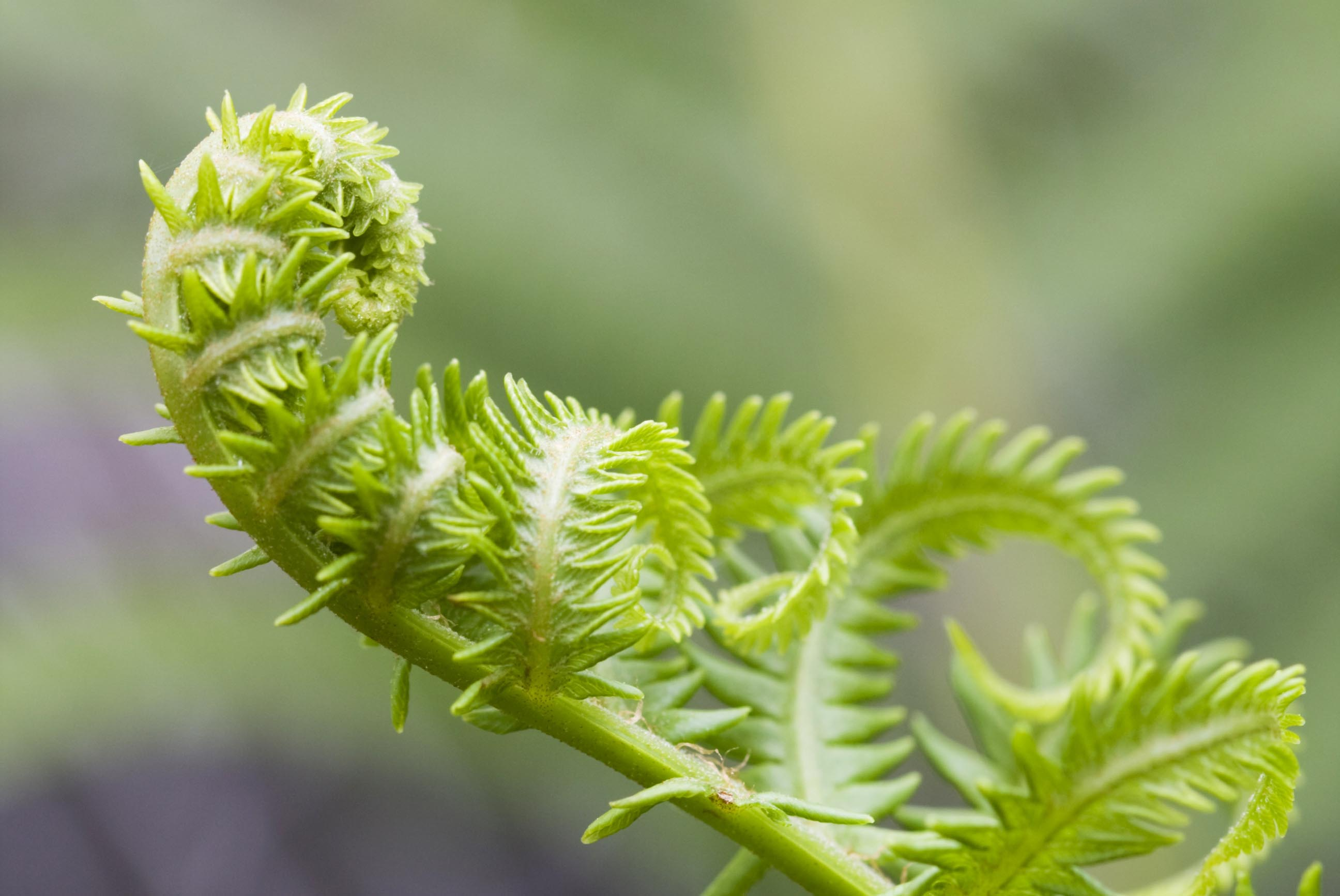 little+fern.jpg (237 KB)